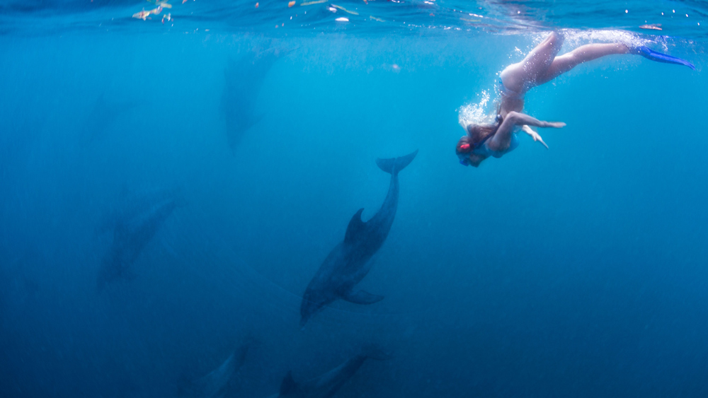 Swim with dolphins on a day-trip to Kisite-Mpungi Marine Park ©Shimoni Reef Lodge