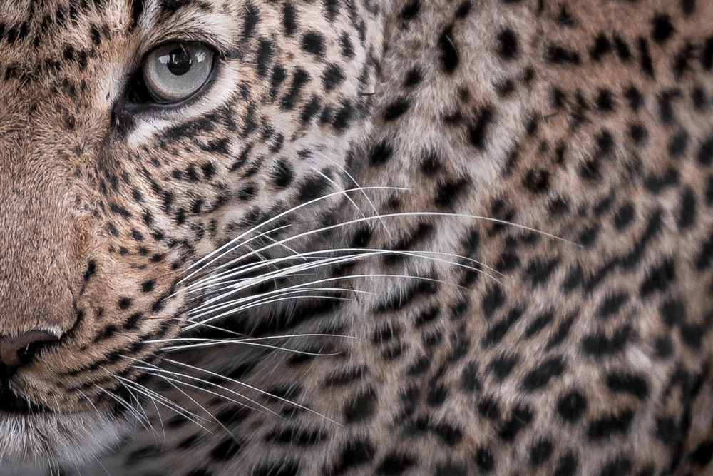 I got the eye of the leopard in Sabi Sand Game Reserve, South Africa ©Sean Cresswell