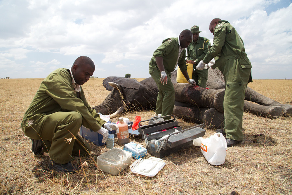 The DSWT KWS Mara Mobile Vet team save the day ©The David Sheldrick Wildlife Trust