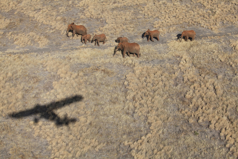 Keeping an eye on elephants ©The David Sheldrick Wildlife Trust