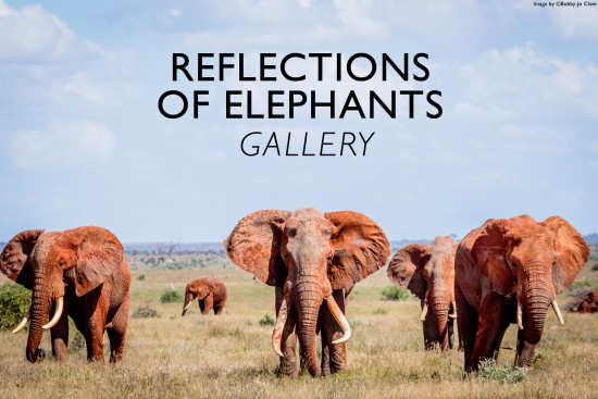 reflections-of-elephants-gallery