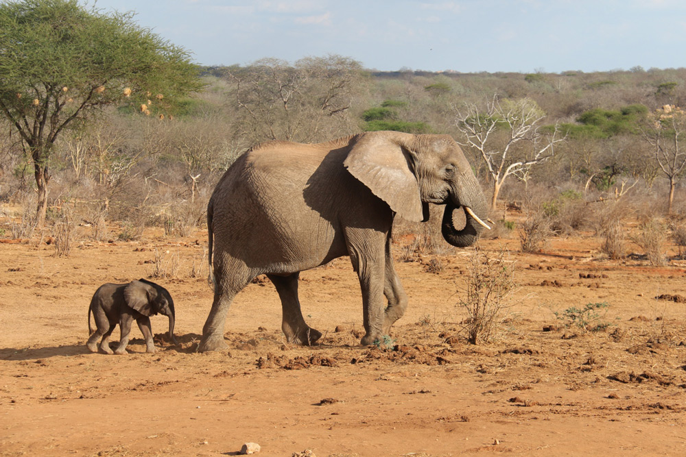 Wiva and Wendi ©The David Sheldrick Wildlif Trust