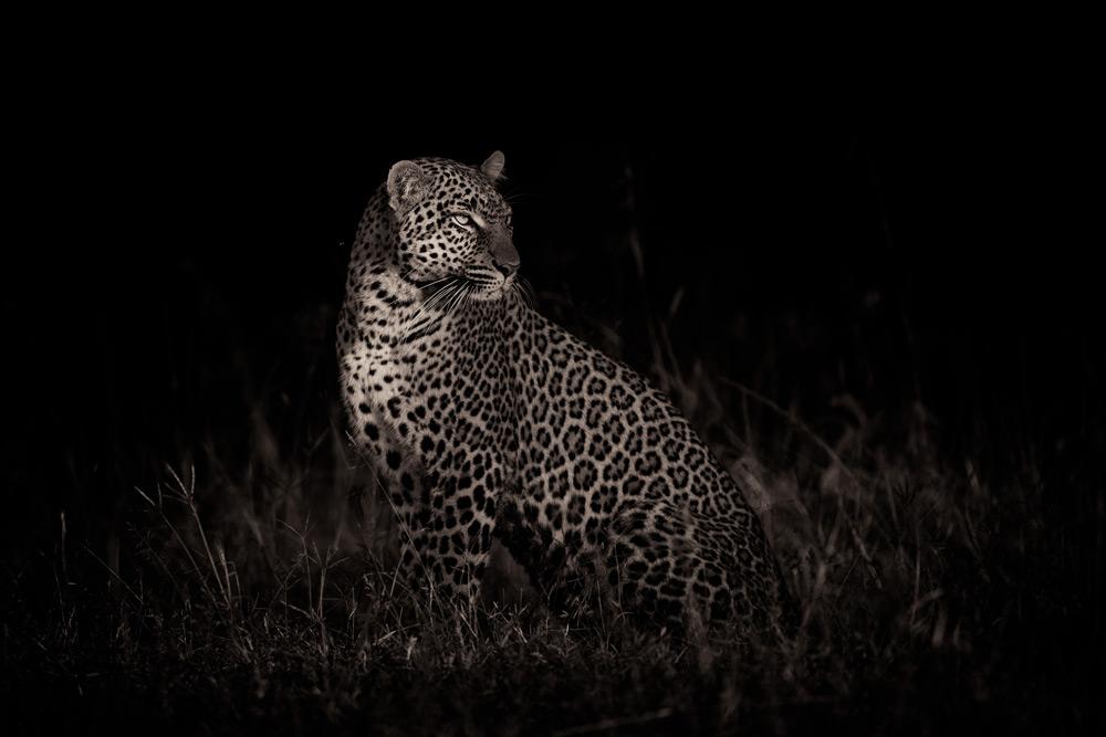 leopard-sitting-maasai-mara