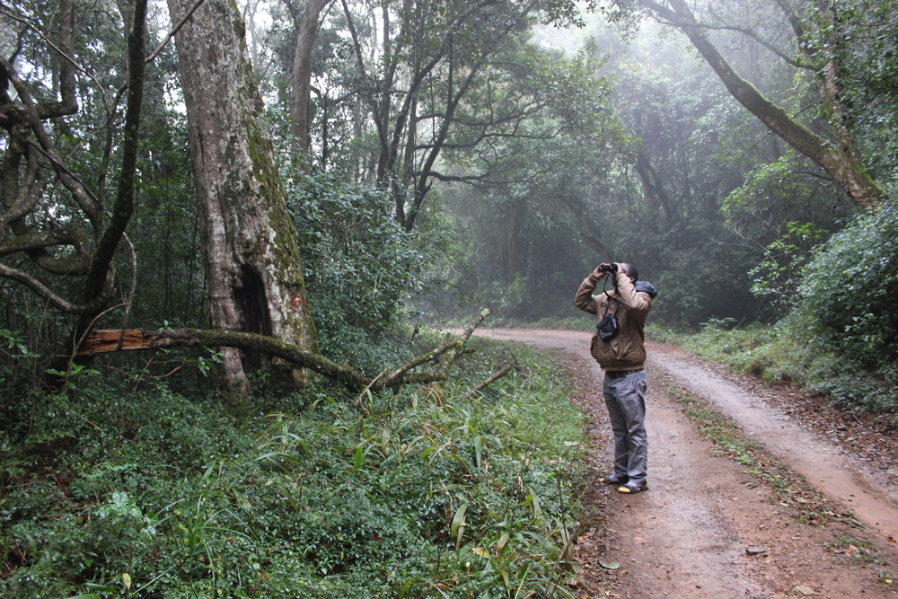 mariepskop-birdwatching-simon-espley