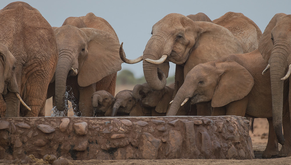 elephant-herd-drinking