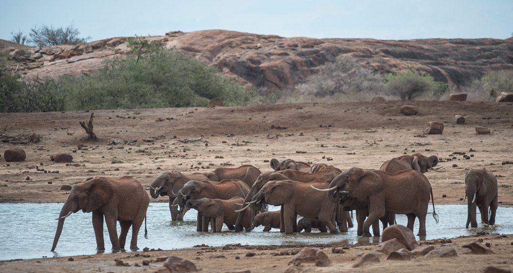 elephant-herd-waterhole-tsavo