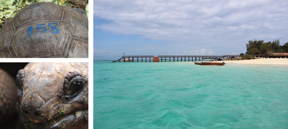 prison-island-tortoises