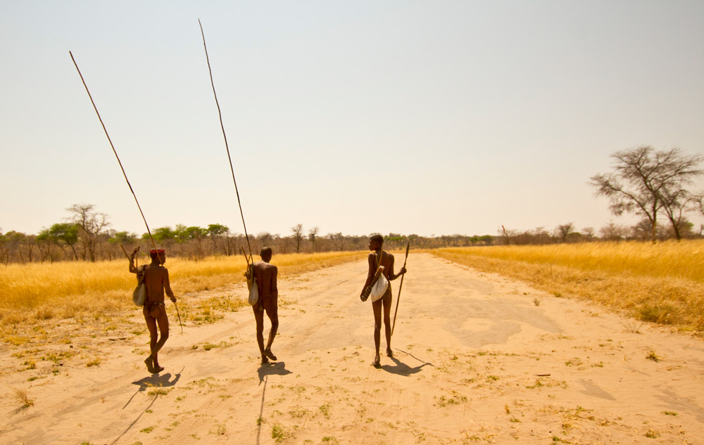 San people set off with poles used to hook and retrieve porcupines or spring hares from their deep burrows ©Christian Boix