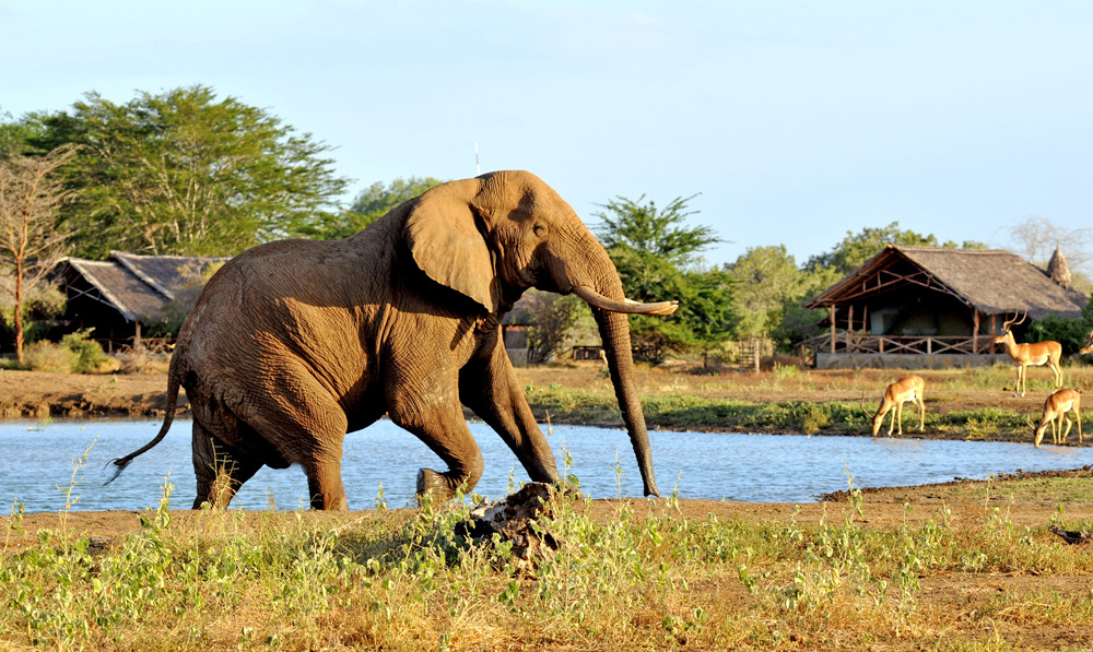 satao-camp-elephant