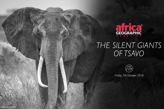 silent-giants-tsavo-dex-kotze