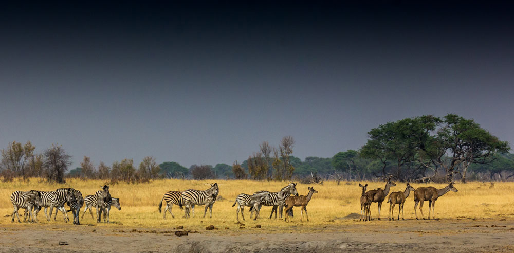 Rain approaches Hwange © Tim Marks