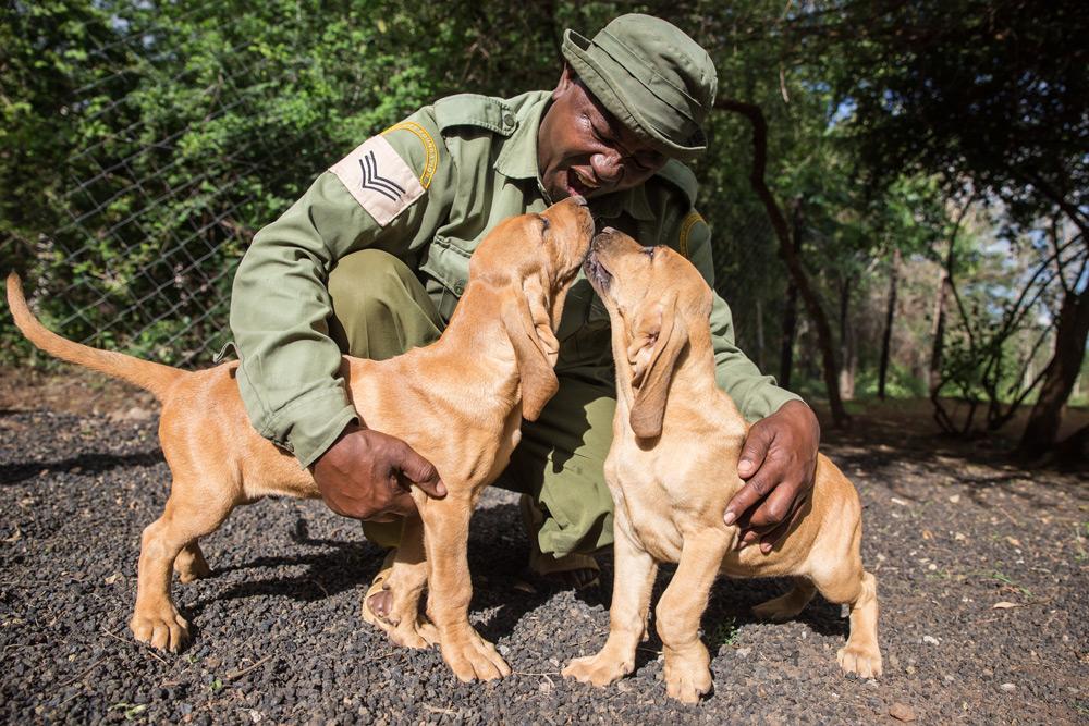 anti-poaching-dogs-handler