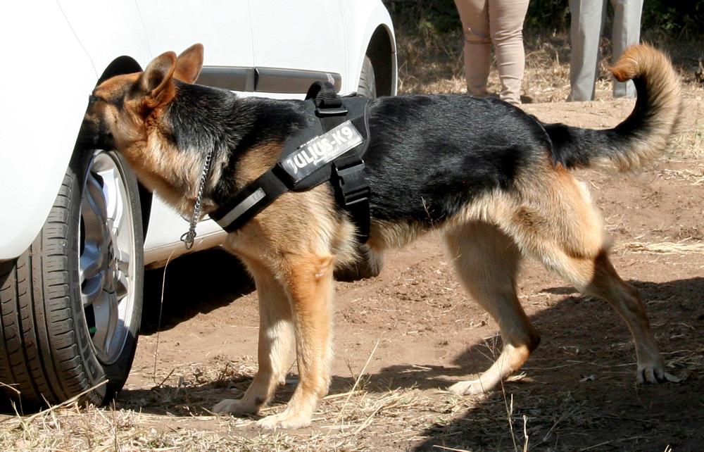 kruger-sniffer-dog