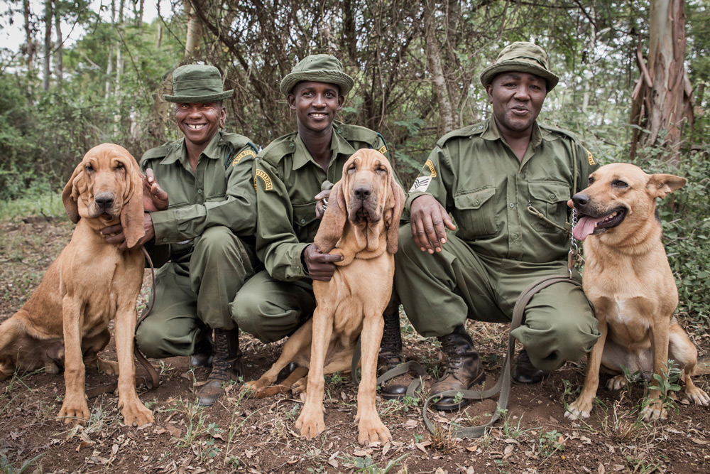 three-rangers-dogs