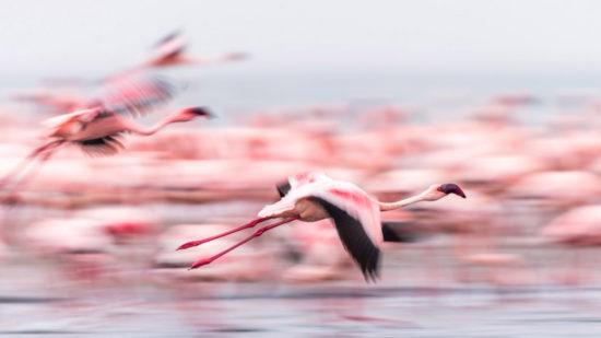 Anna-Kruger-Flames-of-pink-Walvis-Bay-Namibia