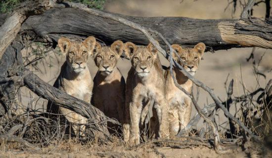 14-Kalahari-Corlette-wessels