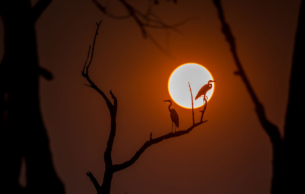 Herons greet the dawn in South Luangwa National Park © Peter Geraerdts