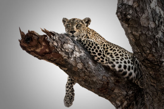 Jacques-Briam-leopard2