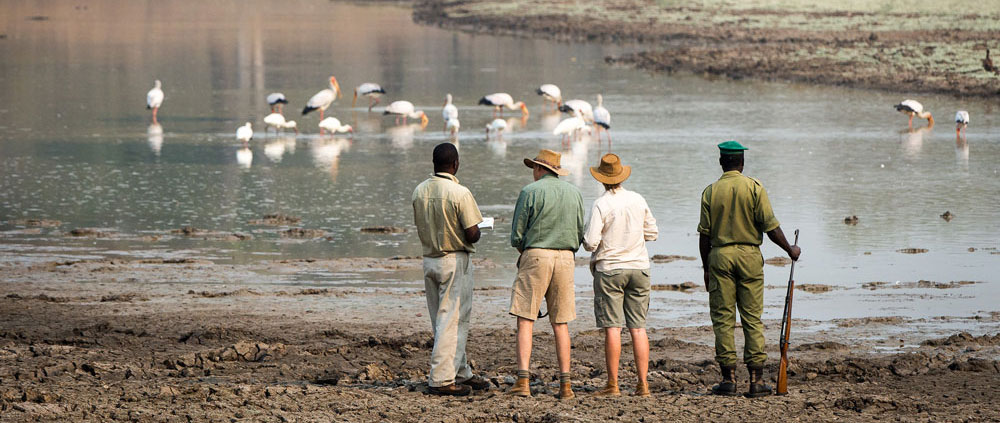 The Robin Pope Safaris' Mobile Walking Safaris have long been known as the best wilderness experience of the South Luangwa. Guests spend five days walking through the north of the park.