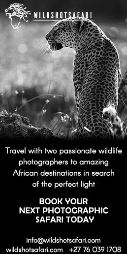 wildshot-safaris-2