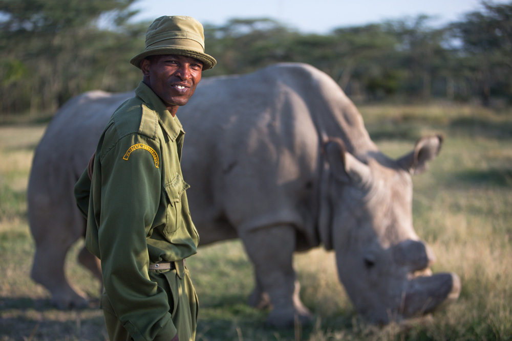 Male northern white rhino in the world with his keeper