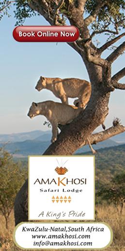 Amakhosi