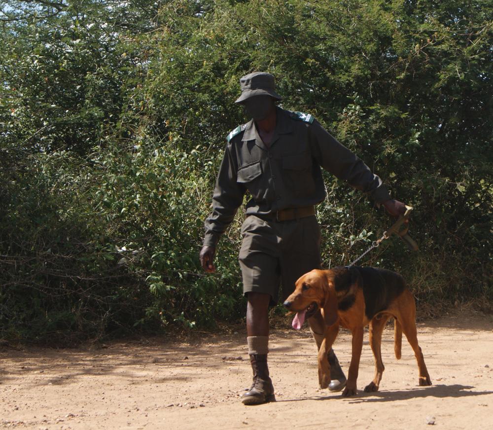 Tracking dog demonstration