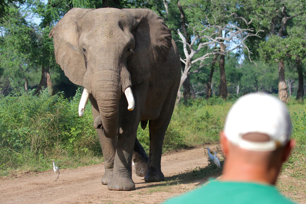 elephants-mana pools-safari-Zimbabwe