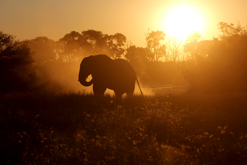elephant-mana-pools-sunset-safari-zimbabwe