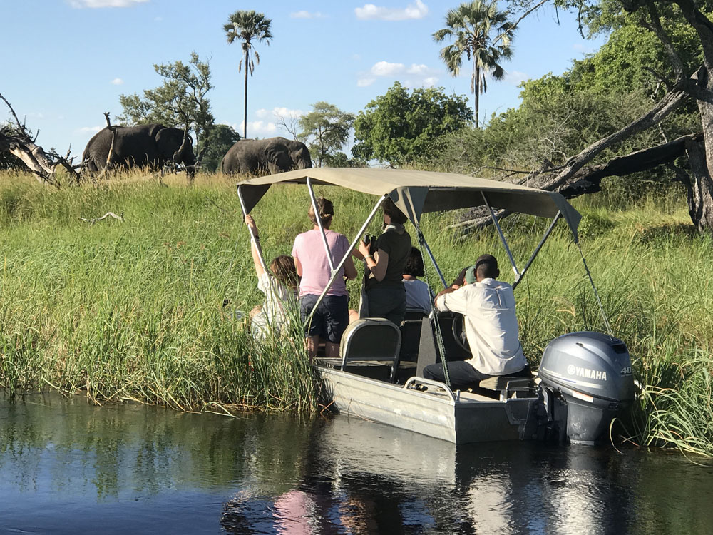 boat, river, elephant, reeds, wildlife, African safari