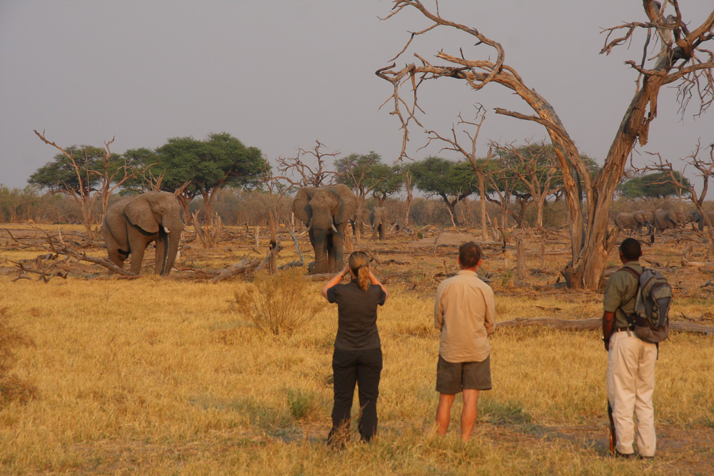 Guests watching two elephants while on safari in Khwai, Okavango Delta