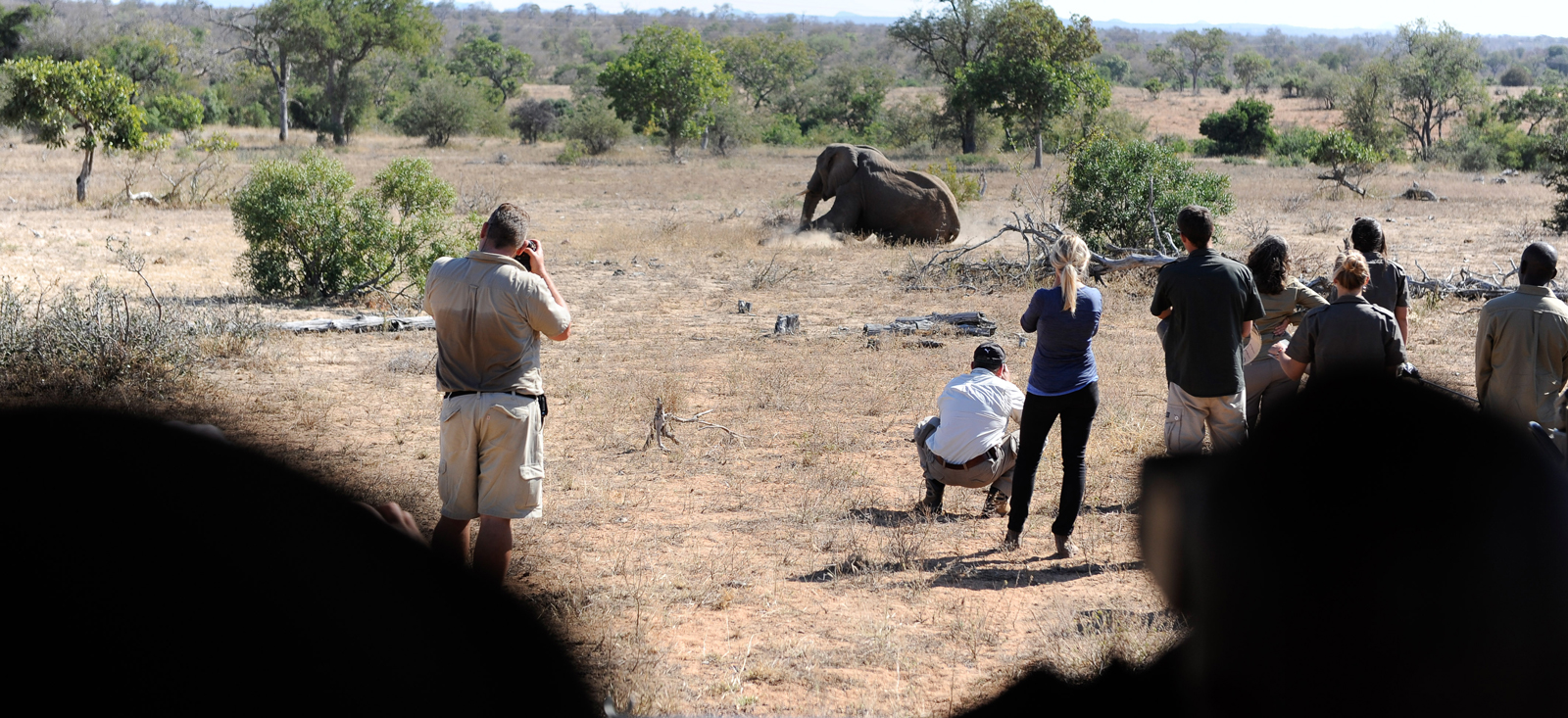 Conservation team watching an elephant