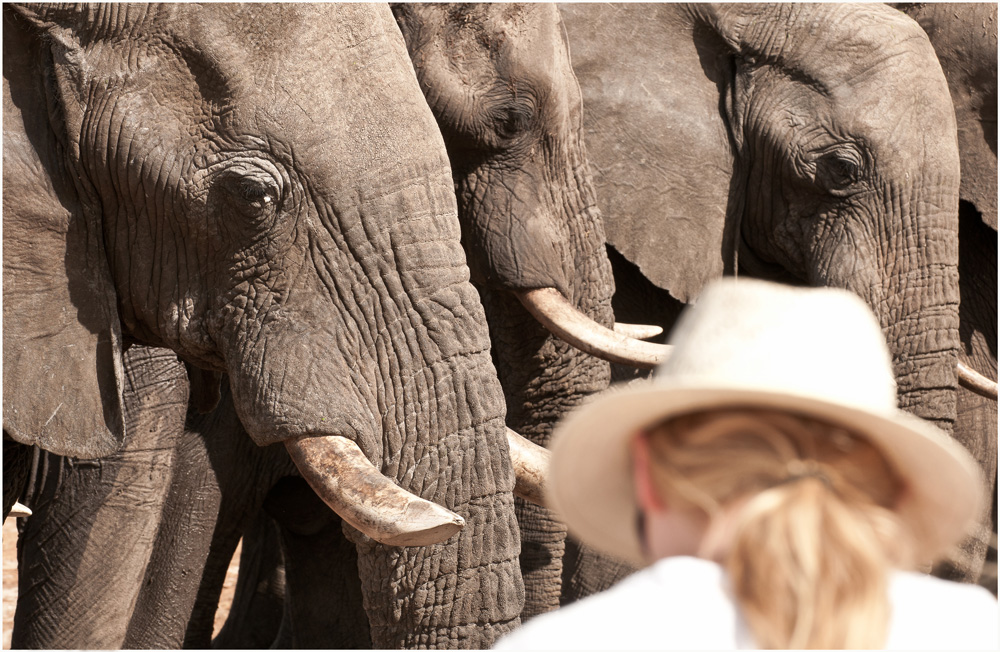 Elephants and tourist - Water for Elephants Trust, Botswana