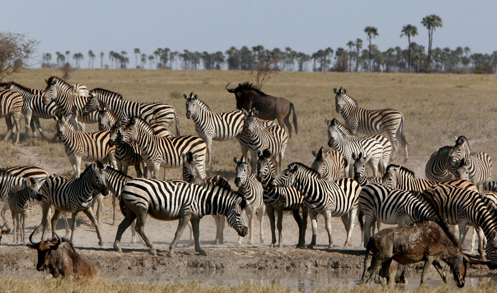 © Uncharted Africa