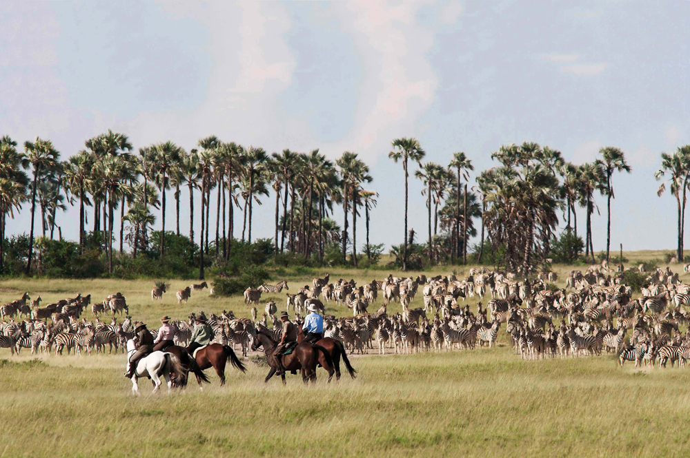 People on horseback looking a large herd of zebra