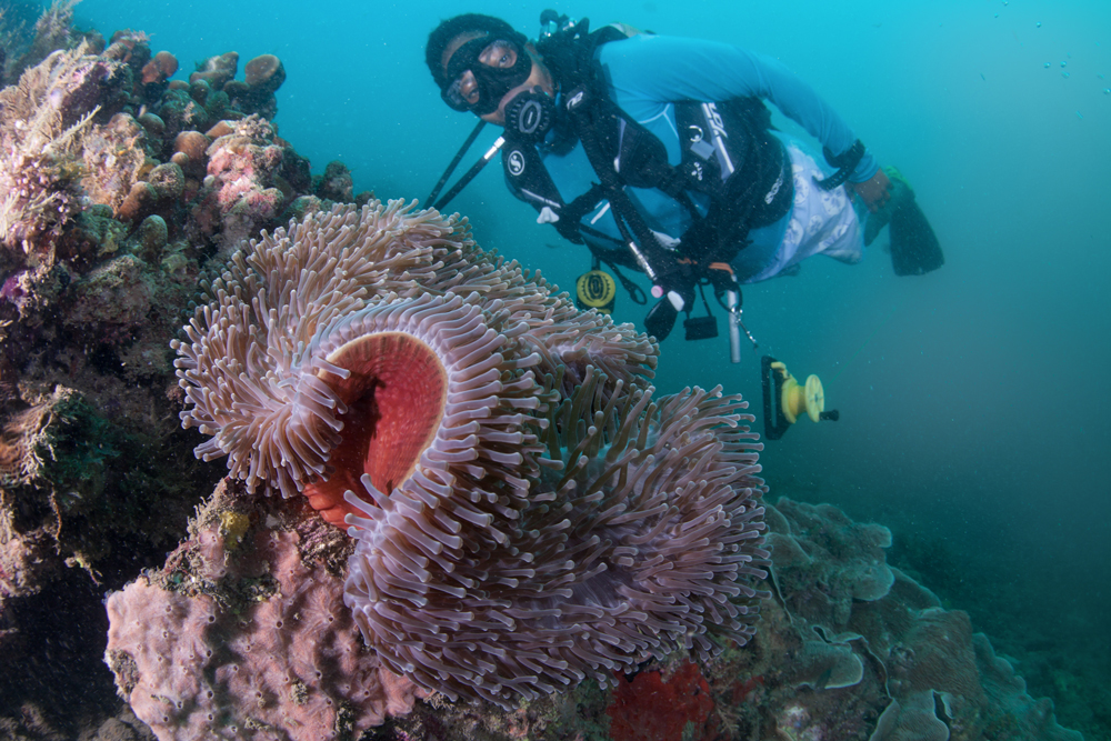 Offshore reefs are home to a variety of marine life