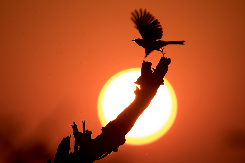 A bird at sunset