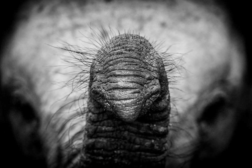 Close up photo of an elephant