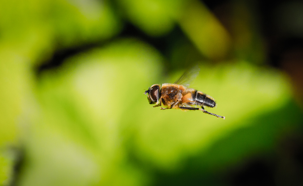 A close up of a bee flying