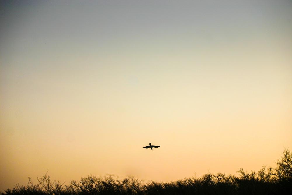 A bird soaring through the air