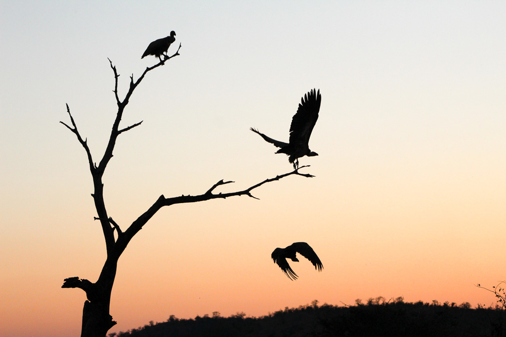 Two birds sitting in a tree and one flying through the air