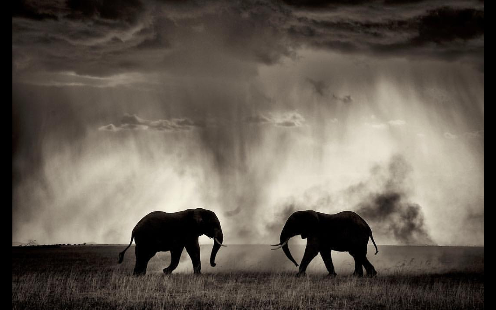 Two elephant bulls fight under a stormy sky in Amboseli National Park, Kenya © Andrew Campbell (Instagram/acsafaris) (Photographer of the Year 2018 Finalist)