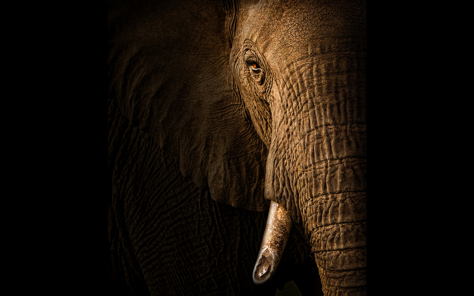 """Broken"" – an elephant with a broken tusk in Maasai Mara National Reserve, Kenya © Andy Howe (Photographer of the Year 2018 entrant)"