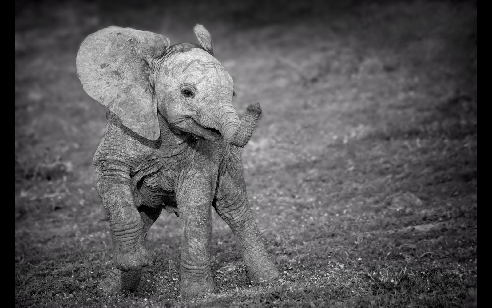 Playful elephant calf in Addo Elephant National Park, South Africa © Annette Heymans (Photographer of the Year 2018 entrant)