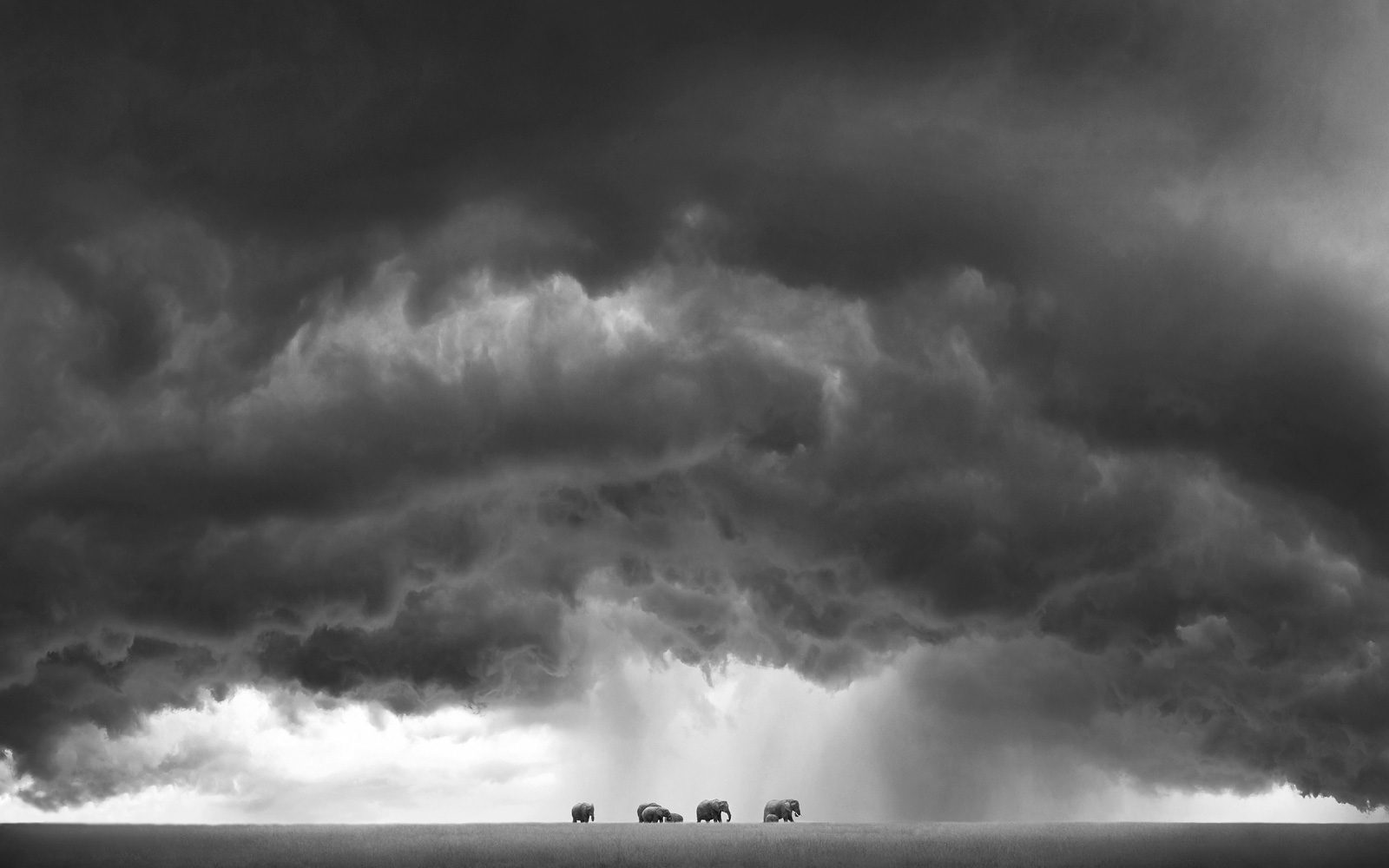 """The land of giants"" in Maasai Mara National Reserve, Kenya © Björn Persson (Photographer of the Year 2017 Semi-finalist)"
