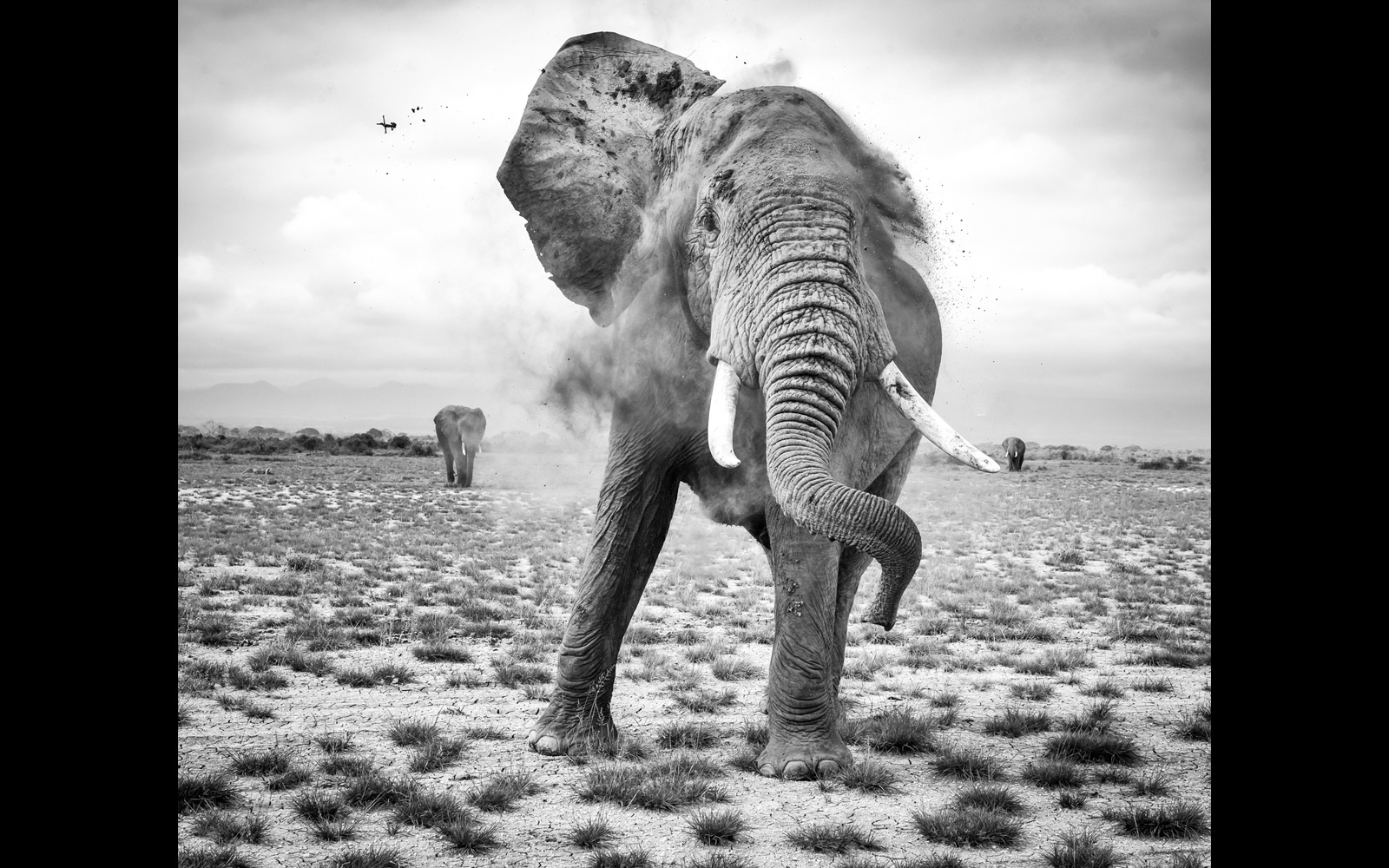 """Unleashed fury"" in Amboseli National Park, Kenya © Dana Kennedy (Photographer of the Year 2018 entrant)"