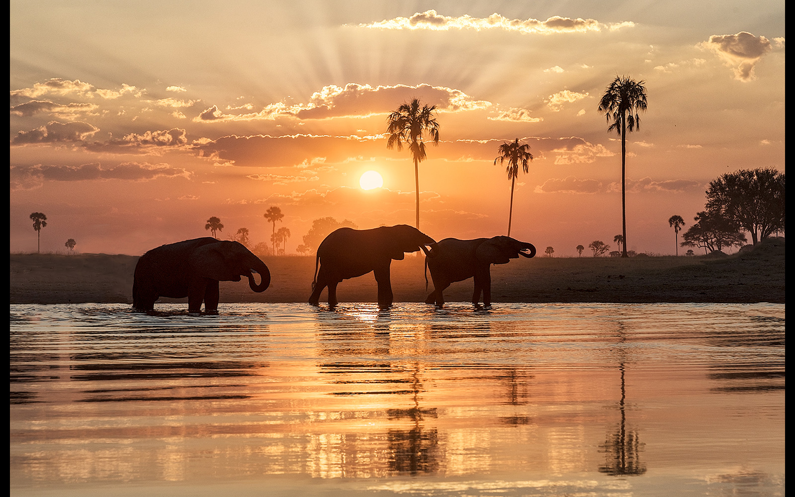 A beautiful atmospheric sunset with elephants in Hwange National Park, Zimbabwe © Greg Metro (Photographer of the Year 2018 Top 101)