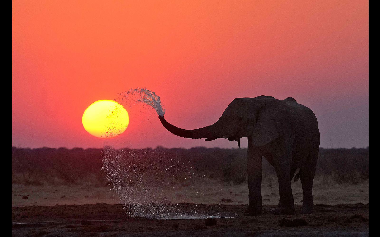 """Elephant sunset"" in Etosha National Park, Namibia © Johan J. Botha (Photographer of the Year 2018 entrant)"