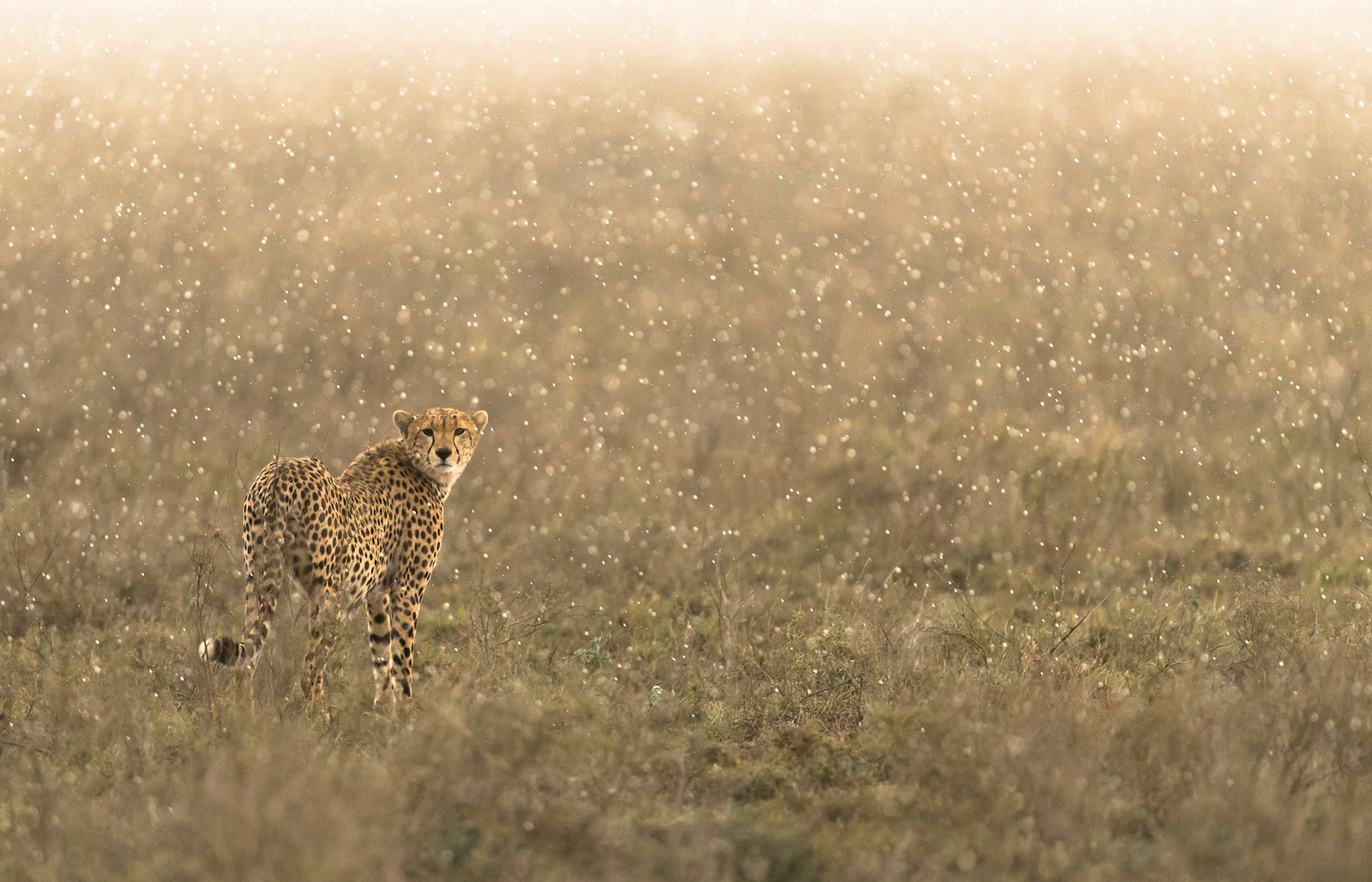 A magical shower in Ngorongoro Crater, Tanzania ©George Turner