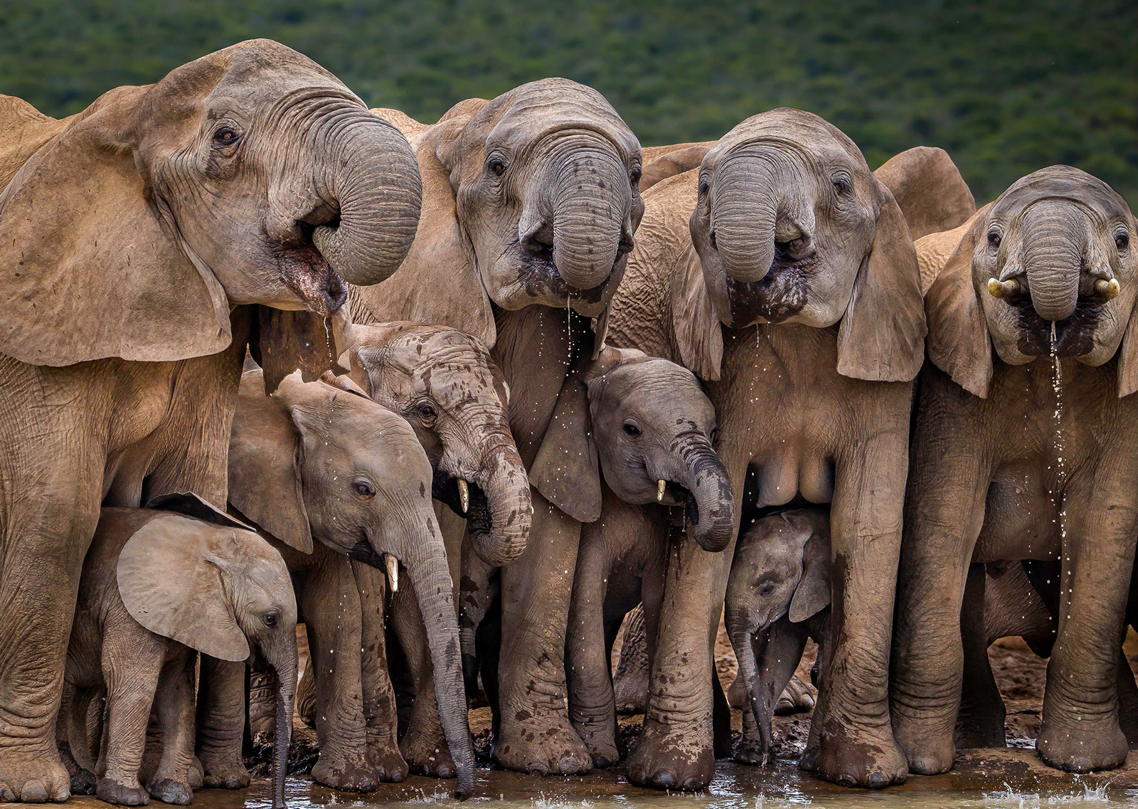 """""""In unison"""" at Addo Elephant National Park, South Africa ©John Vosloo"""